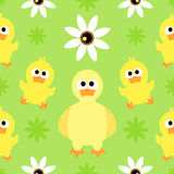 Seamless background  with duck Stock Photos