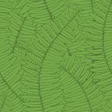 Seamless background fern leaves Stock Images