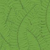 Seamless background fern leaves. Beautiful seamless background with fern leaves Stock Images