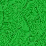 Seamless background with fern leaves Royalty Free Stock Photo