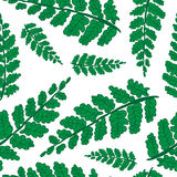 Seamless  background of fern leaves. Royalty Free Stock Photography