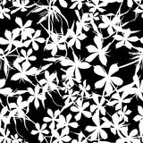 Seamless background with flowers of beautiful hand-drawn silhouette  phlox Stock Photos