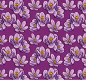 Seamless background flowers crocus Stock Photo