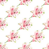 Seamless background with flowers Royalty Free Stock Images