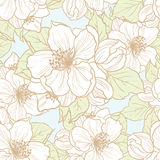 Seamless background with flowers. Vector seamless floral background. Pattern with cherry blossom Stock Photography