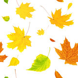 Seamless background with flying autumn leaves Stock Images