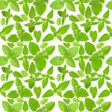 Seamless background with fresh mint leaves Stock Photography