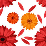 Vector Seamless background with gerbera flowers. Royalty Free Stock Photography