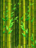 Seamless background with green bamboo Stock Images