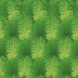 Seamless background, palm leaves Royalty Free Stock Images