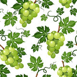 Seamless background with green grapes. Vector illustration. Royalty Free Stock Photo
