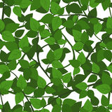vector seamless background with green leaves. Royalty Free Stock Photo