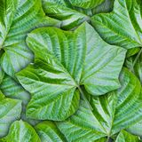 Seamless background from green leaves Royalty Free Stock Photography