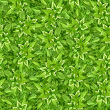 Seamless background with green leaves. Vector illustration. Royalty Free Stock Photography