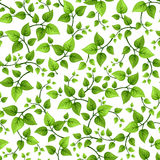 Seamless background with green leaves. Vector illustration. Stock Images