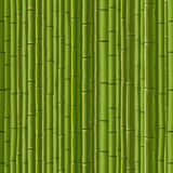 Seamless background of green wall bamboo. Stock Images