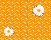 Seamless background - honeycomb and chamomile Stock Image