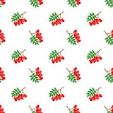 Seamless background image colorful tropical fruit red rowan berry. Can be used for both print and web page Stock Photography