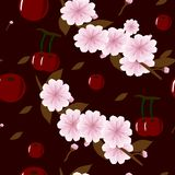 Seamless-background-with-juicy-cherries-and-cherry-flowers-on-Burgundy-background stock illustration