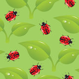 Seamless background with ladybirds Royalty Free Stock Image