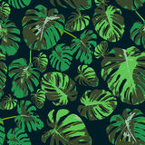 Seamless background with leaves. Exotic leaves, tropical forest. Seamless vector background Stock Photos