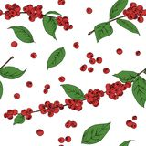 Seamless background leaves and fruits of coffee vector illustration