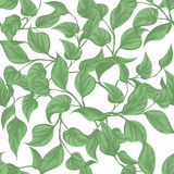 Seamless background. leaves Monstera with outline  Stock Photo
