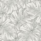 Seamless background. leaves monstera palm Royalty Free Stock Photography