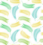Seamless Background with Leaves of Palm Tree Royalty Free Stock Photography