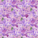 Seamless background with lilac flowers Stock Image