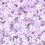 Seamless background with lilac flowers. Vector illustration. Stock Images