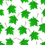 Seamless background with Maple leaves Stock Image
