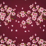Background maroon with branch of cherry tree Royalty Free Stock Images