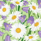 Seamless background with meadow flower Stock Image