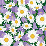 Seamless background with meadow flower Royalty Free Stock Photography