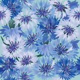 Seamless background with meadow flower. Seamless pattern background with blue and white  cornflowers Stock Photos