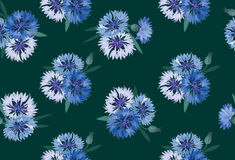 Seamless background with meadow flower Stock Images