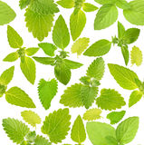 Seamless background with mint leaves Royalty Free Stock Image