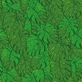 Seamless background, monstera green leaves Royalty Free Stock Photo