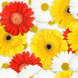 Seamless background of motley flowers Royalty Free Stock Images
