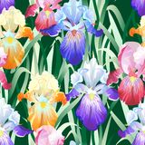 Seamless Background with Multicolored Iris Flowers Royalty Free Stock Image