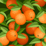 Seamless background with oranges and leaves. Royalty Free Stock Photography