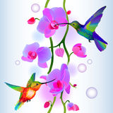 Seamless background with orchids and humming-birds Royalty Free Stock Photography