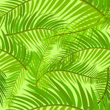 Seamless background of palm leaf Stock Photos