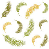 Seamless background with palm leaves Royalty Free Stock Photos