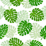 Seamless background with palm leaves Royalty Free Stock Image