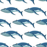Seamless background pattern of blue whales. Seamless nautical themed background pattern of blue whales in square format for marine wallpaper and fabric design Royalty Free Stock Photos