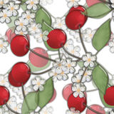 Seamless background pattern with colorful cherry and bloom Royalty Free Stock Image