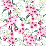 Seamless background pattern of pink Sakura blossom or Japanese f Royalty Free Stock Photography