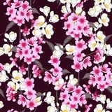 Seamless background pattern of pink Sakura blossom Royalty Free Stock Image